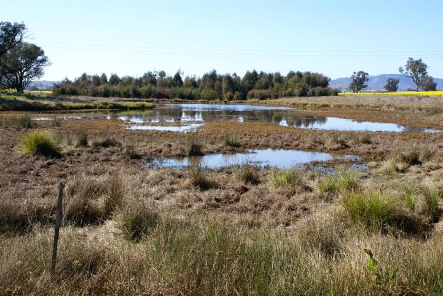 Farm dams – wetland refuges during heatwaves