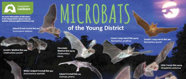 Microbat poster for FB